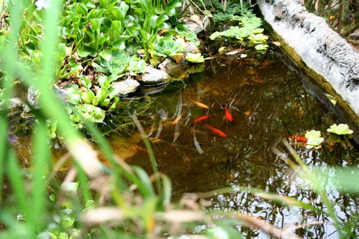 bassins-de-poisson